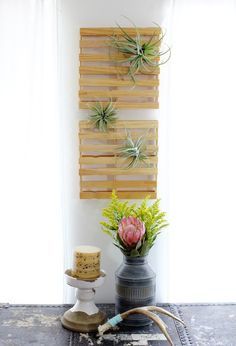 Airplants in DIY mini pallets -- easy to make with Home Depot's free Sticks that separate their lumber skids.