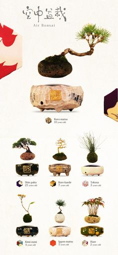 Voici lesAir Bonsaï, desétonnants bonsaïs en lévitation qui défient la gravité ! Ces superbes créations japonaises, intituléesHoshinchu Air Bonsai