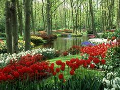 Curta seu estilo Empório das Gravatas em um lugar aconchegante ~ www.emporiodasgravatas.com.br ... Woods and Stream, Keukenhof Gardens, Holland