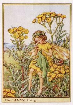 Tansy Flower Fairy Vintage Print c1950 Cicely by TheOldMapShop