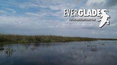 Florida Everglades - AIRBOAT