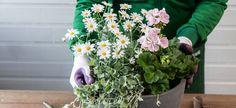 Slik planter du i krukkene Planting, Slik, Patio, Plants