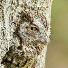 Amazing Owl !
