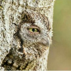Amazing Owl!