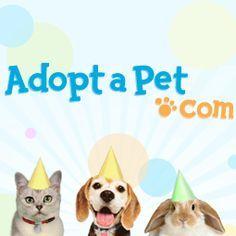 Wilmington, North Carolina - Pet Adoption. Cat Adoption Team has dogs, puppies, cats, and kittens to adopt.