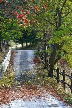 Country Road and Fence.beautiful want this leading to ma mansion Beautiful Roads, Beautiful Landscapes, Beautiful World, Beautiful Places, Beautiful Pictures, Beautiful Beautiful, Country Life, Country Roads, Country Walk