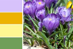 Crocus Flowers: In an ode to the perfect weather we've been having here in Boston, this color palette features the very first flowers I always see popping up from the ground: crocuses! An orange, a yellow, and of course purple and green, this scheme really reigns sin the essence of early springtime.