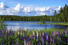 Veja fotos das paisagens naturais mais espetaculares da Suécia ...