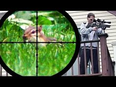 Chipmunk Pest Control [Air Rifle Hunting] (June 25, 2011) - YouTube