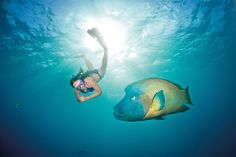 Great Barrier Reef by Tourism Queensland