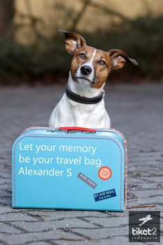Travel quotes with #cute #dog #image
