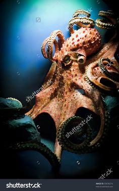 Scary Giant Octopus Foto Stock 55636216 : Shutterstock