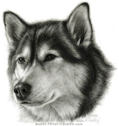 Alaskan Malamute Portrait - Original pencil drawing - Prints, apparel, gifts - Pencil, pastel, watercolor painting - Pets Pictured