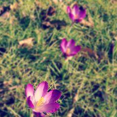 Spring has sprung http://brightbazaar.blogspot.com
