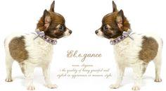 Roxy and Lulu - Trendy Posh Swarovski Crystal Dog Collars. www.lucymedeiros.com