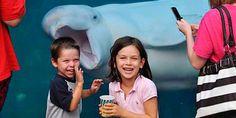 #beluga #whale #photobomb