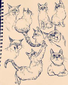 @babycoconutcat #art #drawing #cats