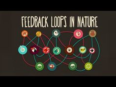 Feedback Loops in Nature (a key concept of systems thinking) from Anje-Margriet Neutel Science Classroom, Teaching Science, Science Education, Science And Technology, Teaching Resources, Career Exploration, Teaching Ideas, Classroom Ideas, Stem Science