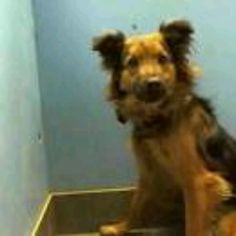 ON DEATH ROW! SHARE ALL NIGHT! IT'S ALL HE HAS! Manhattan NY.  Homer.  Neutered 3 year old male.  Dies in a.m.  See Urgent Part 2 on fb.