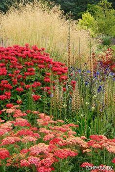 Этюд в красных тонах. Цветник красный.: Группа Клумбы и цветники