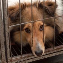 Puppy Mill Rescue Dogs Rescue Dogs Puppy Mill Rescue Puppies