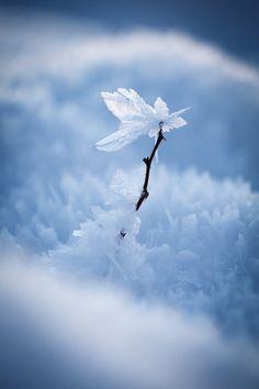 Winter flower by AlesGola.deviantart.com on @deviantART