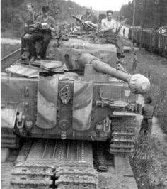 Tiger on transport