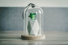 selective focus photography of pineapple artwork in glass dome Glass terrarium and succulent Terrariums Diy, Glass Terrarium, Cactus Terrarium, Terrarium Ideas, Focus Photography, Photoshop Photography, Product Photography, Glass Domes, Glass Vase