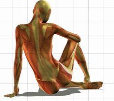 Anatomia Corpo Umano - Modelli 3D per Disegno Artistico ( clicca l'immagine per continuare a leggere )