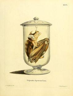 plates 1-80 - Die Säugthiere in Abbildungen nach der Natur / - Biodiversity Heritage Library