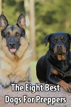 The Eight Best Dogs For Preppers