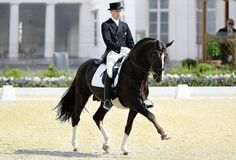 Blu Hors Don Schufro  199316.3 Liver Chestnut Oldenburg stallion.  More pictures:  here  here  here