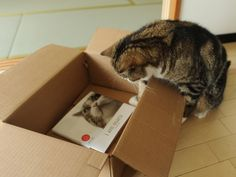 maru the japanese cat | Am Maru' Book on YouTube Cat From Japan, Published in English ...