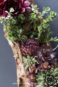 This driftwood filled with succulents is so beautiful!