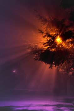 Rays in the Fog