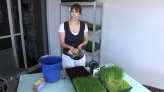 How To grow Wheatgrass so that CANCER is curable NOW. She is using an omega juicer, slow auger just like ours and it is one of the best to juice leaves and grasses.