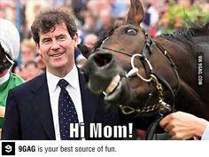 Horse smiles photobomb