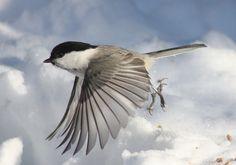 hermosa ave