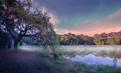 This is a shot I took in the John Chesnut Park next to Tarpon Spring I love this park because you have amazing trees like this one and you can really create and take amazing landscapes photos. Also there is some alligator there which are quite impressive definitely something to see!  #photoserge #park #landscapephotography #florida #trees #nature #sky #blue #fog