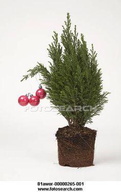 Fonzy tree