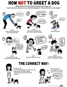 The Correct Way to Greet a #Dog. Check out this incredible #infographic.