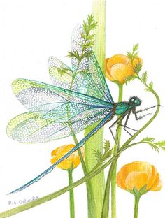 Sheer Wings / sold Art Print by Barbara Anna Cichocka. All prints are professionally printed, packaged, and shipped within 3 - 4 business days. Choose from multiple sizes and hundreds of frame and mat options. Dragonfly Painting, Dragonfly Art, Art And Illustration, Illustrations, Dragonfly Illustration, Art Watercolor, Selling Art, Fine Art America, Art Drawings