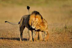 25 Amazing Shots of Wild Life Photography