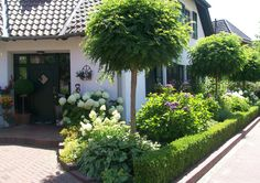 Unique Gardens, Beautiful Gardens, Robin, Trees For Front Yard, Design Jardin, Low Maintenance Garden, Garden Edging, Plantar, Tropical Garden