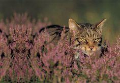 10 des chats les plus envoûtants du monde !  n°3