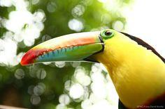 Ave típica / Typical Bird