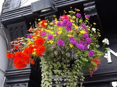 Commercial Hanging Baskets
