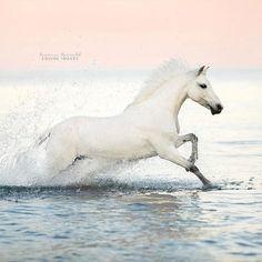 Look, it's a seahorse! . . . #pferdefotografie #huffpostgram #liveunscripted #animalphotography #exploremore #lookslikefilm #createexplore #artofvisuals #horsephotography #horsesofinstagram #agameoftones #lifeofadventure #igmasters #liveauthentic #chasinglight #justgoshoot #animallovers #makemoments #finditliveit #equine #loveanimals #horseplanet #welshpony #Regram via @carinamaiwaldphotos