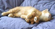 Me & Teddy, takin' a nap.
