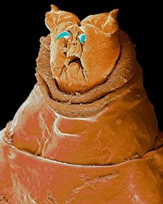 30 microscopic images of creatures that look like alien artwork